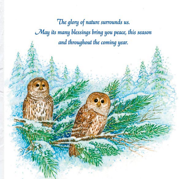 Barred Owl Happy Holidays Card Set of 20 - View 3