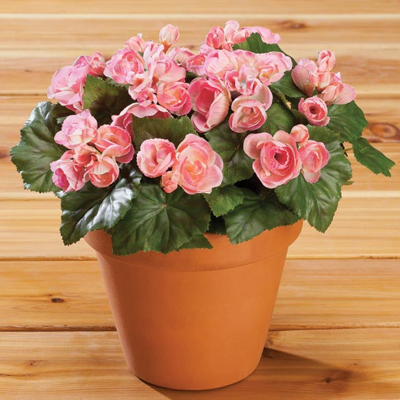 Silk Begonia Bush - View 3
