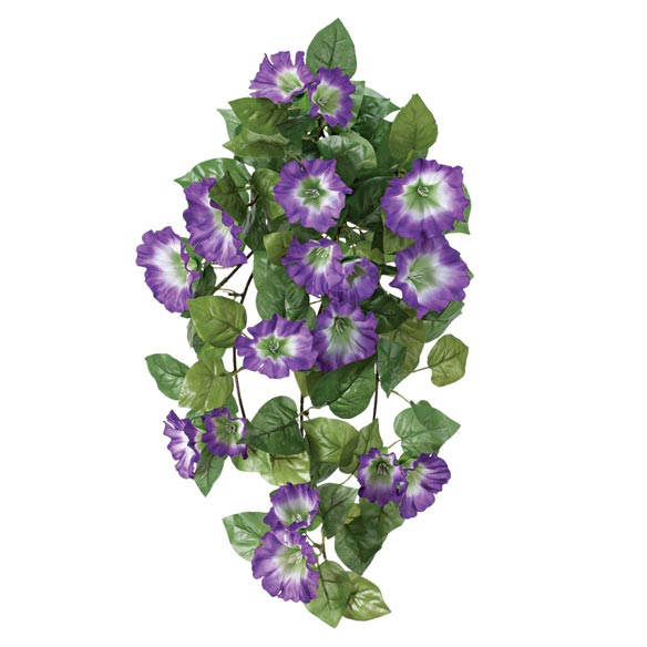 Petunia Hanging Stem - View 5