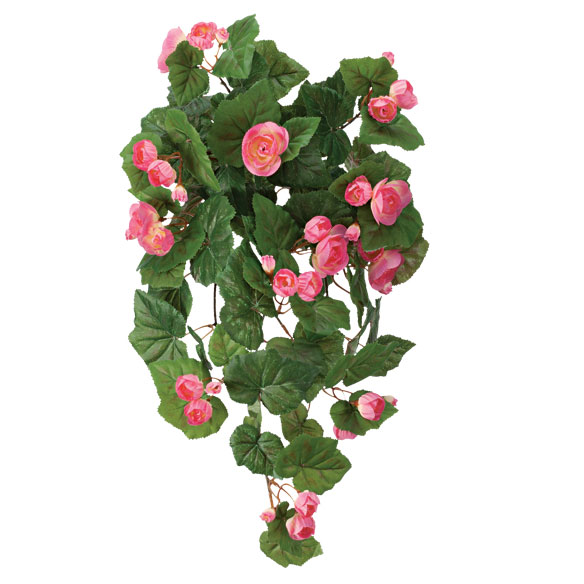 Begonia Hanging Stem - View 3