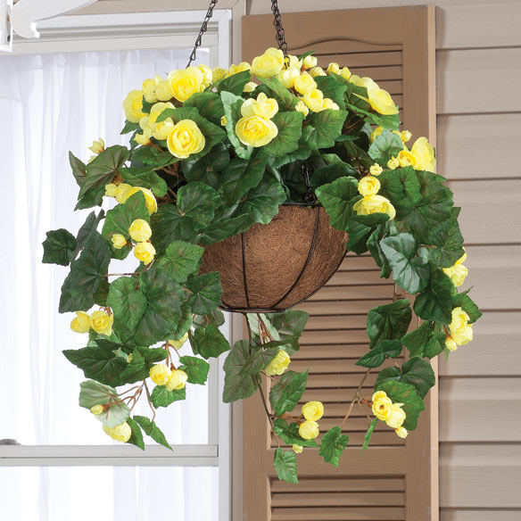 Begonia Hanging Stem - View 4