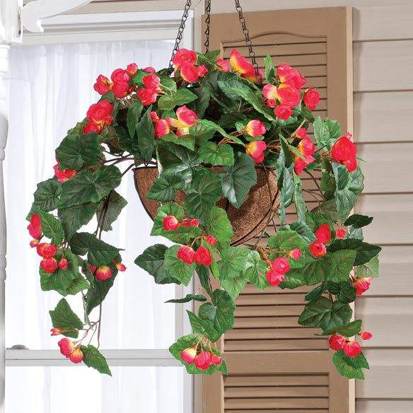 Begonia Hanging Stem - View 5