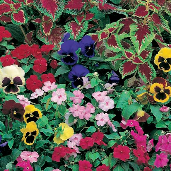 Shady Garden Garden Roll Out Flowers- 2'W x 4'L