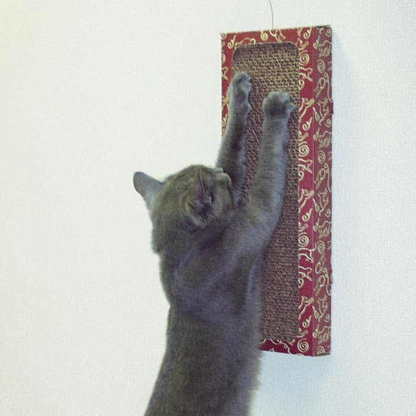 Cat Dancer® Wall Scratcher